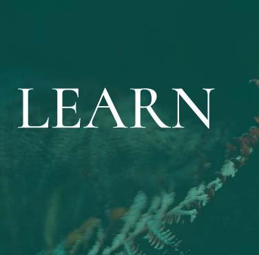 learn_link